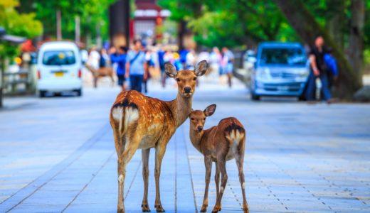 【2020最新】ウーバーイーツ奈良県の配達エリア・注文方法まとめ